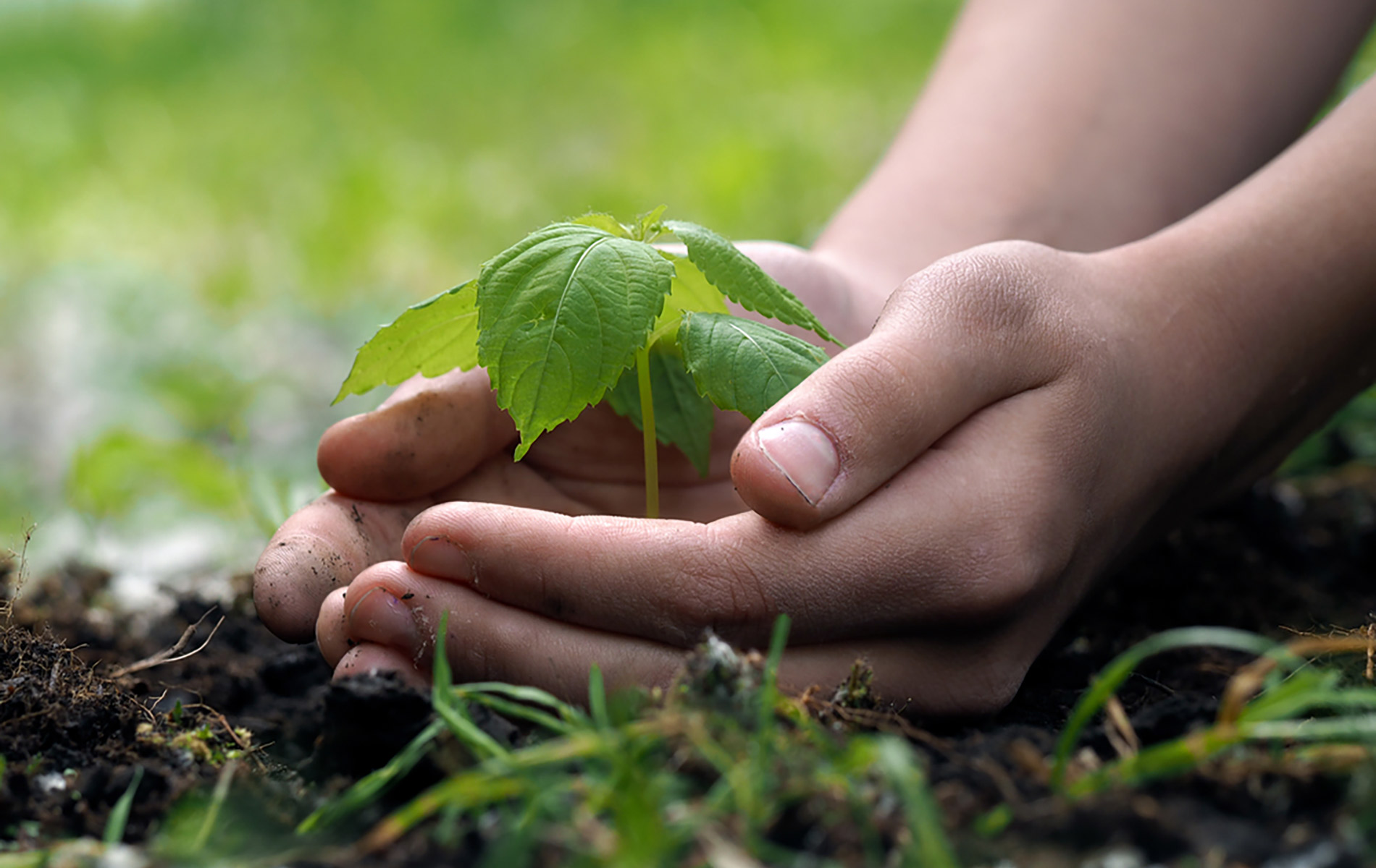 Go Green – How SMEs can save money