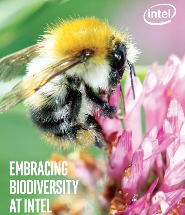 Intel Ireland launches new biodiversity report