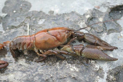 Tackling invasive species – biosecurity needs to be second nature to us all