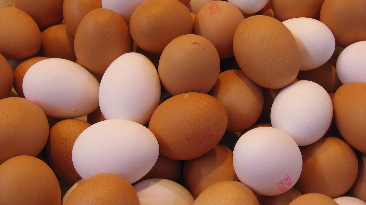 Launch of Sustainable Egg Assurance Scheme