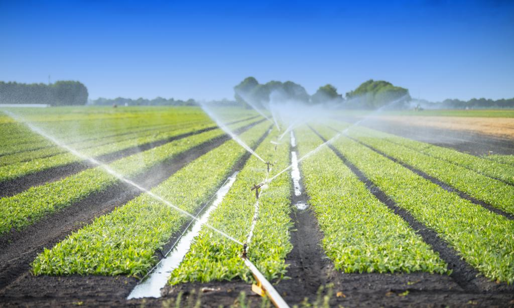 Minimum quality requirements for water reuse in agriculture
