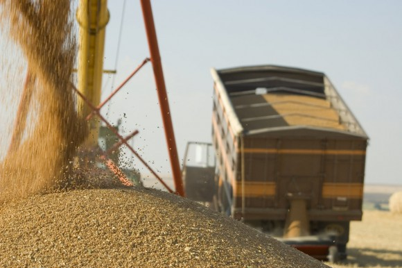EU Grain Storage has Improved but Critical Bottlenecks Remain